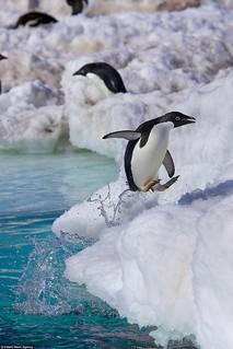 penguin-jump006