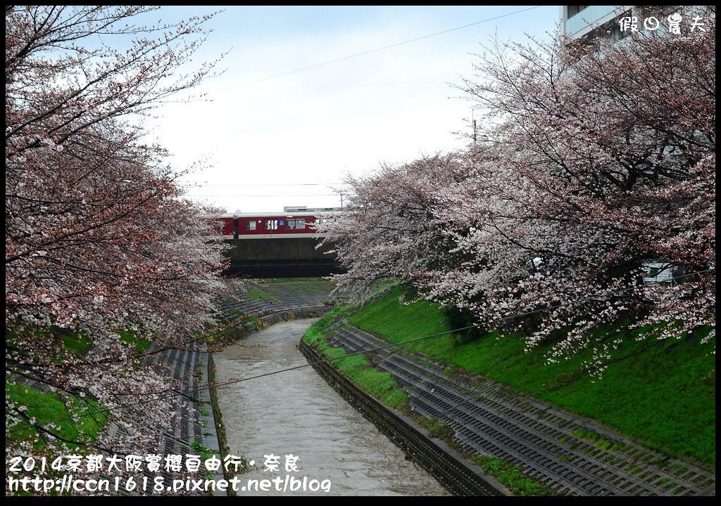 2014京都大阪賞櫻自由行.奈良DSC_0835