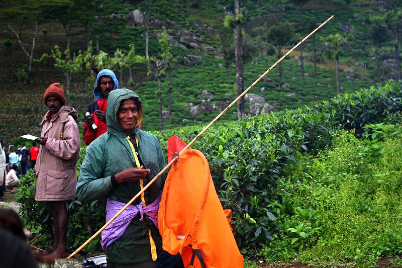 Dambatenne Tea Plantation