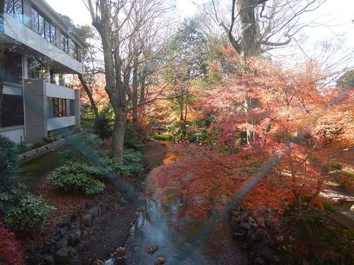 京都家裁と泉川