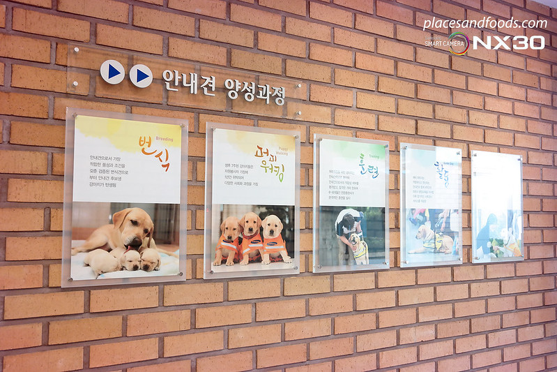 samsung guide dog korea wall