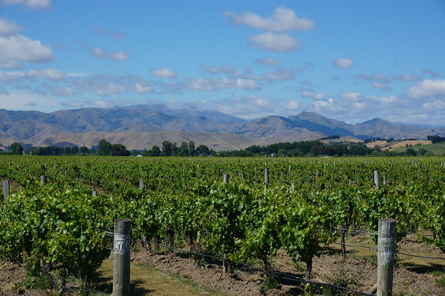 Vineyards near Blenheim