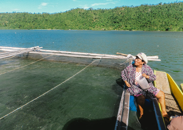 Fish feeding in a cage in Lake Bito, MacArthur, Leyte. Photo by Nelia Gabon, BFAR Region VIII