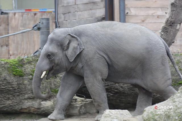 Elefantenjunge Ludwig 2014_11_26 092