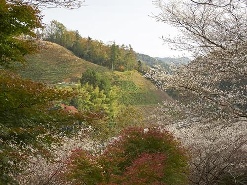 Four Seasons Cherry blossoms