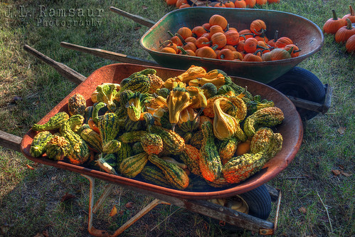 autumn orange color green fall nature colors gourds yellow rural outdoors photography photo nikon colorful tennessee fallcolors pumpkins pic autumncolors photograph thesouth hdr wheelbarrow cumberlandplateau easttennessee ruralamerica 2014 photomatix fallseason minipumpkins bracketed ruraltennessee hdrphotomatix ruralview hdrimaging roanecounty ibeauty hdraddicted d5200 rockwoodtn southernphotography screamofthephotographer hdrvillage gourdspumpkins jlrphotography photographyforgod worldhdr nikond5200 hdrrighthererightnow engineerswithcameras hdrworlds jlramsaurphotography