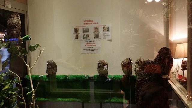 kiba owl cafe 4
