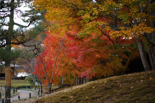 autumn orange color tree green japan canon landscape maple autumnleaves 日本 紅葉 秋 fukushima mapleleaves mapletrees 2014 coloredleaves 福島 福島県 ef85mmf18usm 85f18 eos6d 白河市