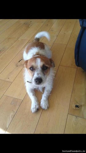 Wed, Oct 29th, 2014 Lost Female Dog - Unnamed Road, Wexford
