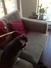 Crick and the new fish on stick toy