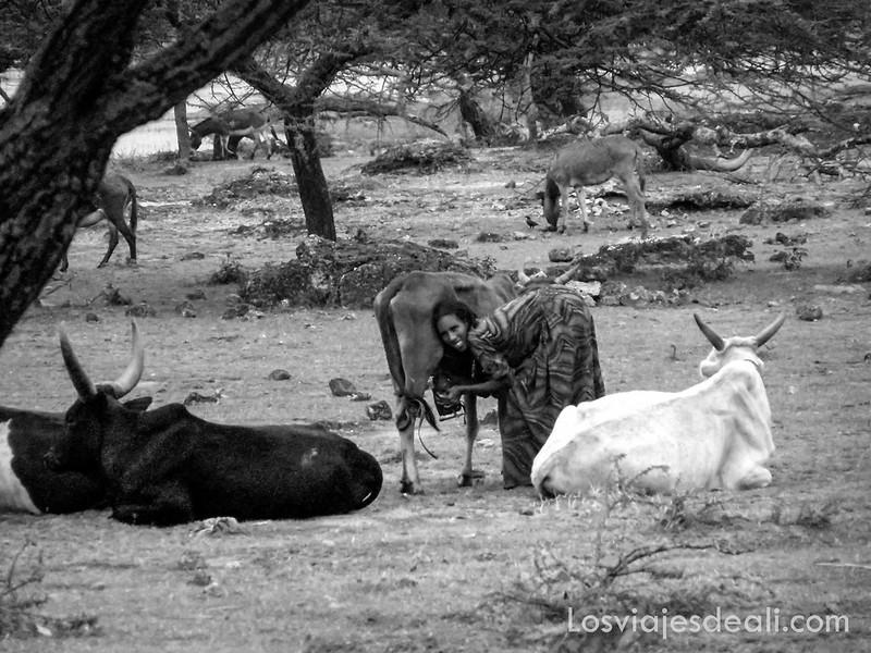 lagos de etiopia ordeñando vacas