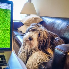 Papa\'s working from home and I\'m making sure he\'s getting stuff done.
