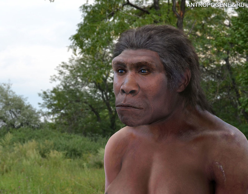 Reconstruction of Homo ergaster on antropogenez.ru