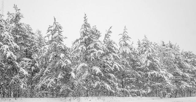 La neige lourde tombe sur Trois-Rivières