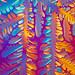 Liquid Crystal DNA dendrite by linden.g