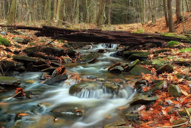 Fern Rock Nature Trail (12)