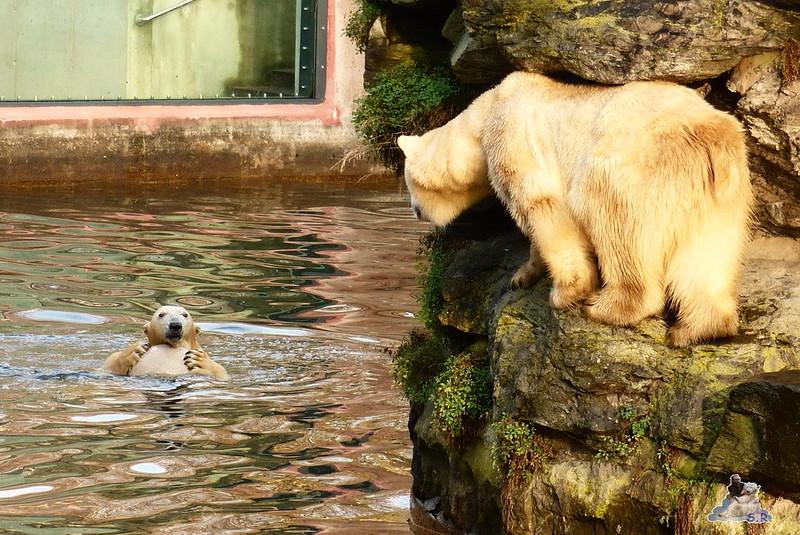 Tierpark Berlin 06.12.2014 148