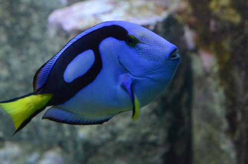 Bunte Fische im Züricher Zoo