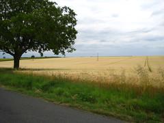 Wheatfields, Lerne