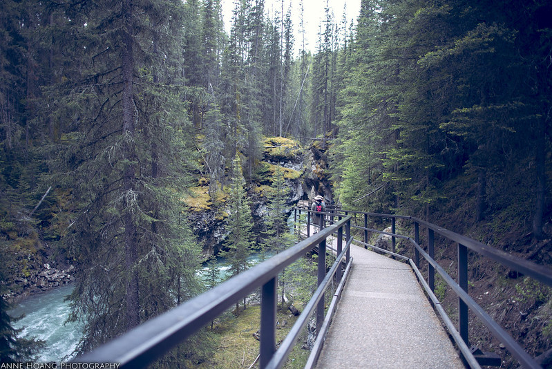 hiking trail in Banff