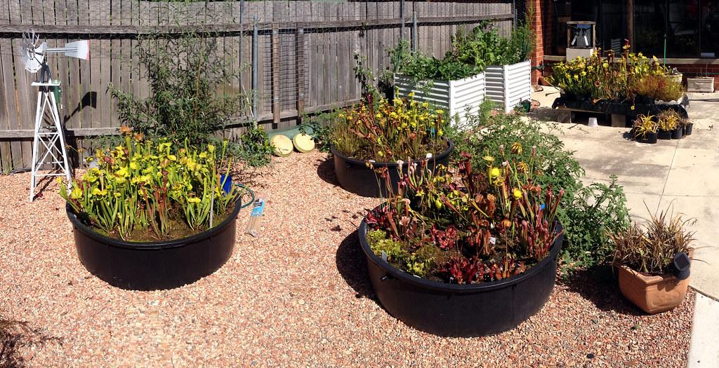 Sarracenia gardens