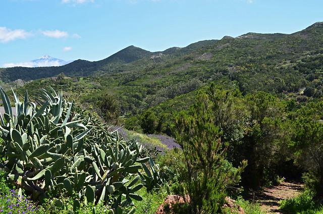 Path to, Los Bailaderos, Teno Alto, Tenerife