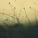 Winter and Grain by Dor Reznik