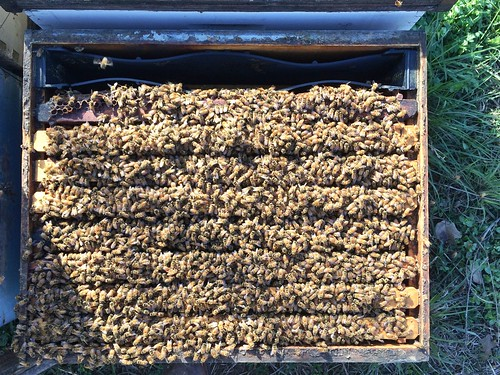 Thriving bees