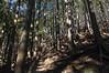 杉・檜の樹林帯を下る