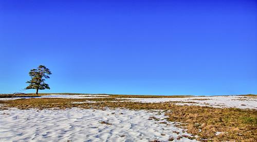 desktop wallpaper panorama snow tree nature landscape panoramic slovenia desktopwallpaper lonelytree desktopphoto panoramicview noclouds landscapephotography panoramicphotography cerknica slivnica landscapeview ifeelslovenia wallpaperphotography wallpaperphoto fotobyiztokkurnik hillbluesky