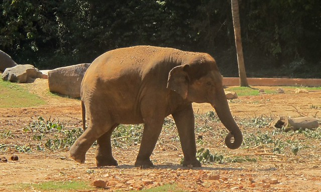 India - Mysore Zoo