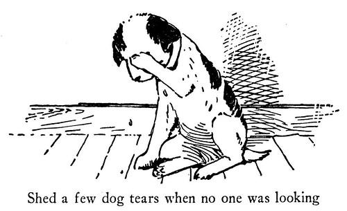 A sad dog