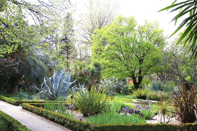 jardin botanique madrid