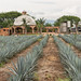 blue agave entrance por ames sf