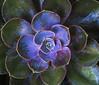 Botanic Gardnes-094