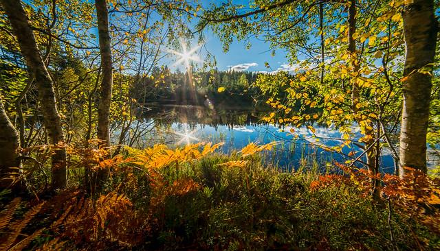 Autumn (Explored)