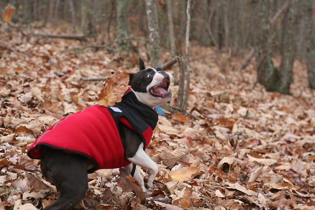 James River State Park Fall 2014 (287)