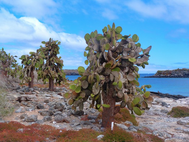 Isla Plaza Sur (Galápagos)