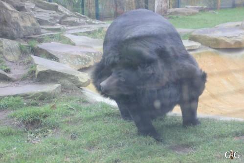 Zoo Berlin 11.01.2015 54