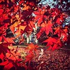 #autumn #leaves poised for attack