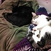 Sleepy cats.