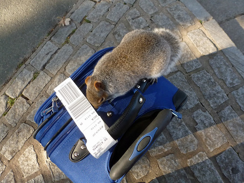 squirrel on luggage