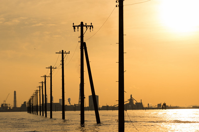 Utility Poles on the water