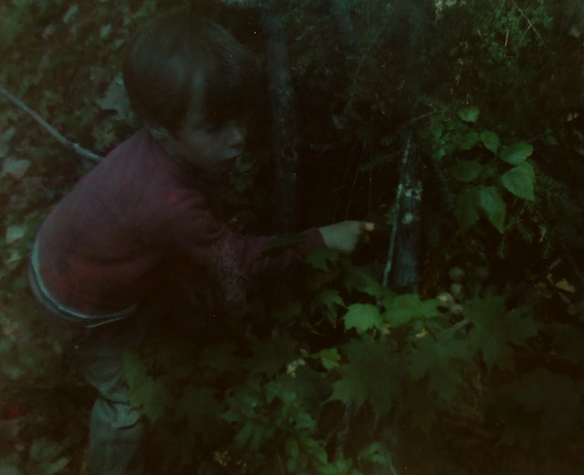discovering a ruffed grouse nest, June 1970
