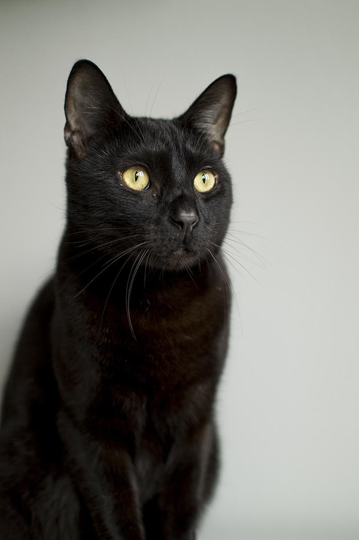 black_cat_pet_blog_uk
