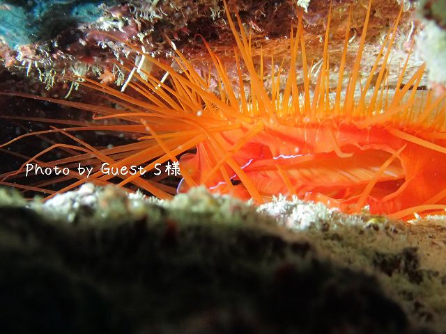 キラキラ光る貝にびっくり!