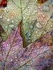 Fall Leaf Abstract
