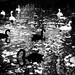Swans by Vasilikos Lukas