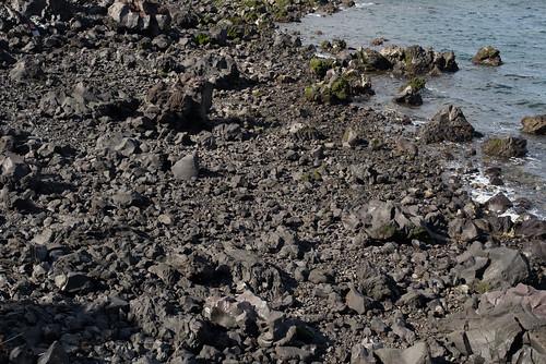 桜島の海岸