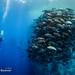 Alex Mustard Red Sea Workshop (with Adam Hanlon) - Jun 16